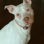 Rosie - Pit Bull