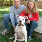 Omni - American Bulldog