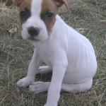 Winnie - Pitbull