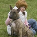 Freedom - Bull Terrier
