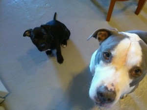 Lula and foster brother Bluto